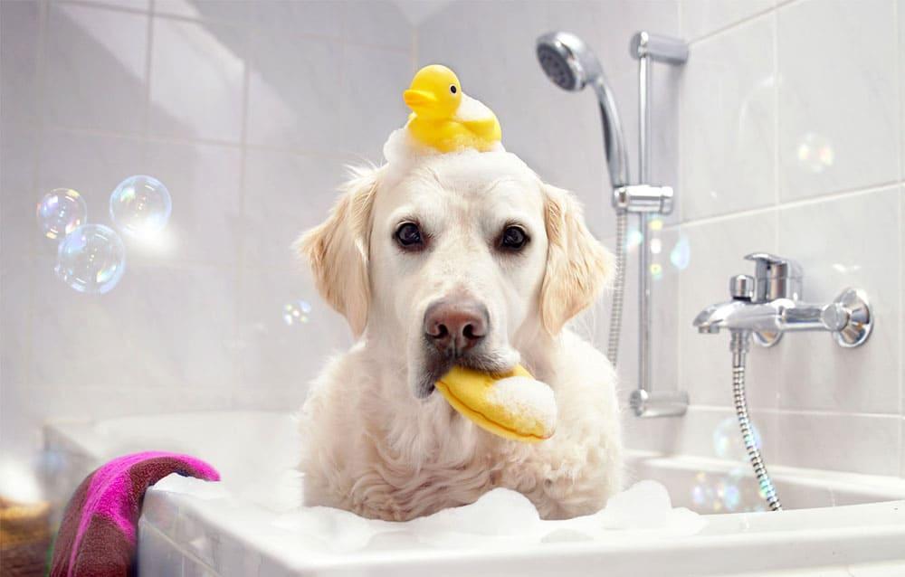 Купание собаки в ванной